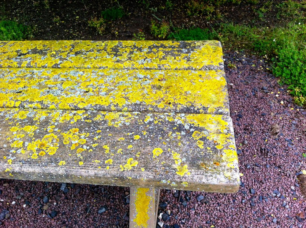 A lichen covered picnic bench