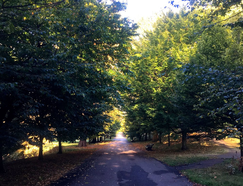 My daily route through Greenwich Park