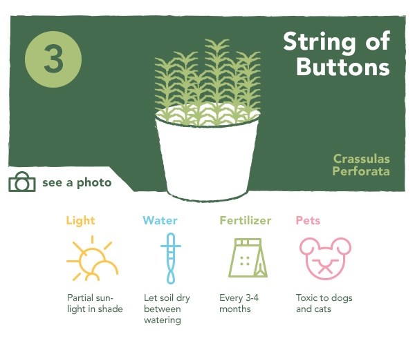 3. String of Buttons
