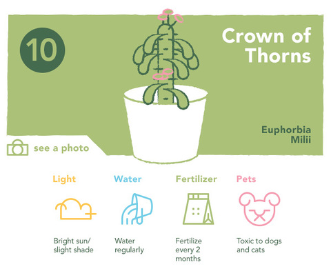 10. Crown of Thorns