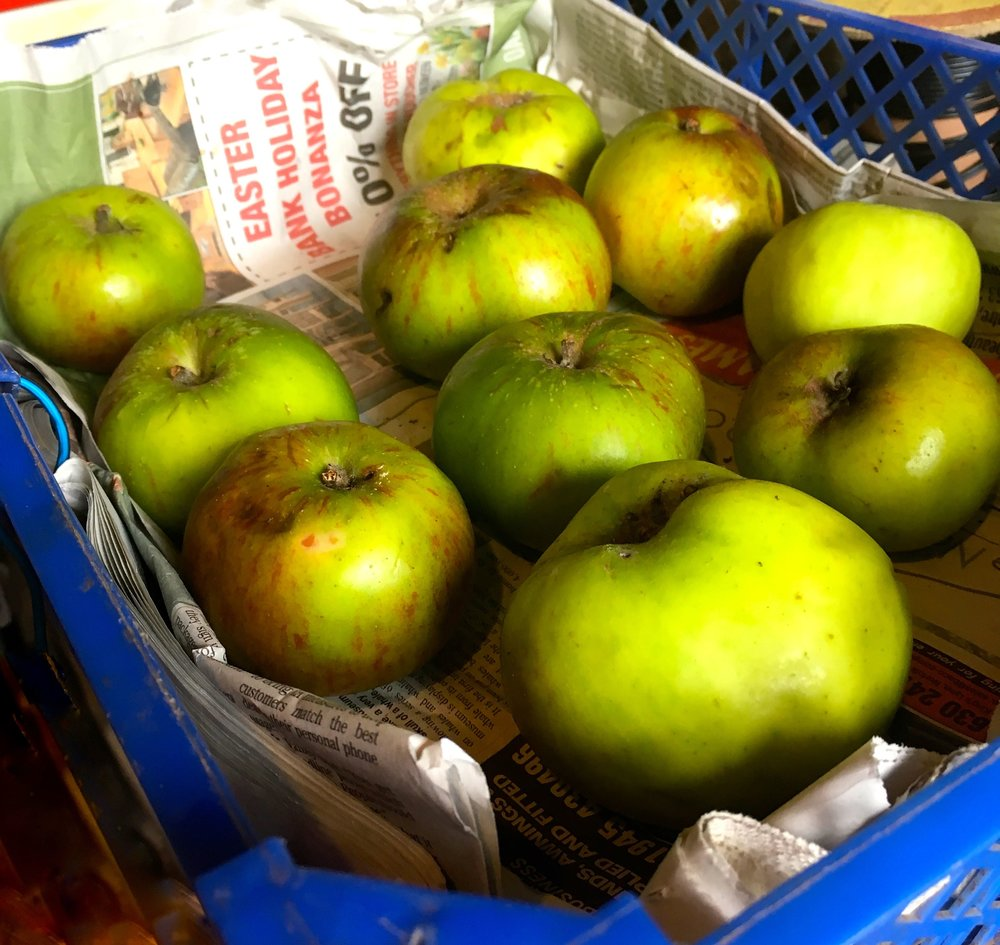 NORFOLK WINDFALL APPLES