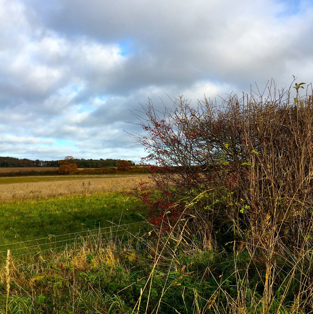THE COLOURFUL HEDGEROWS IN THE BIG SKIED COUNTY OF NORFOLK