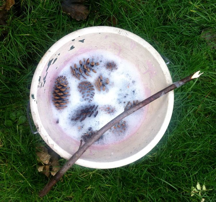 Place the pine cones in a bucket with bleach and stir with a stick