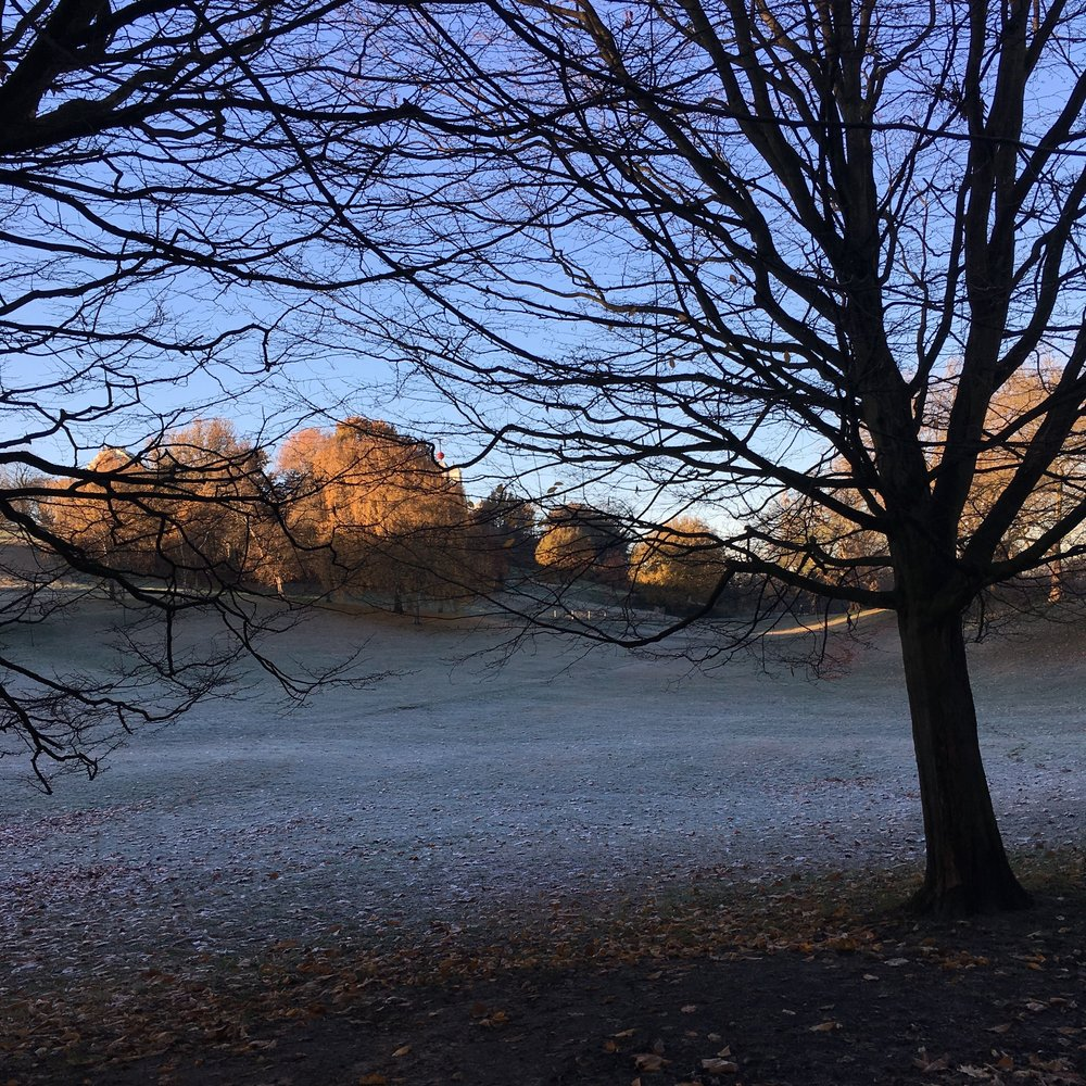 A frosty morning in Greenwich Park, London