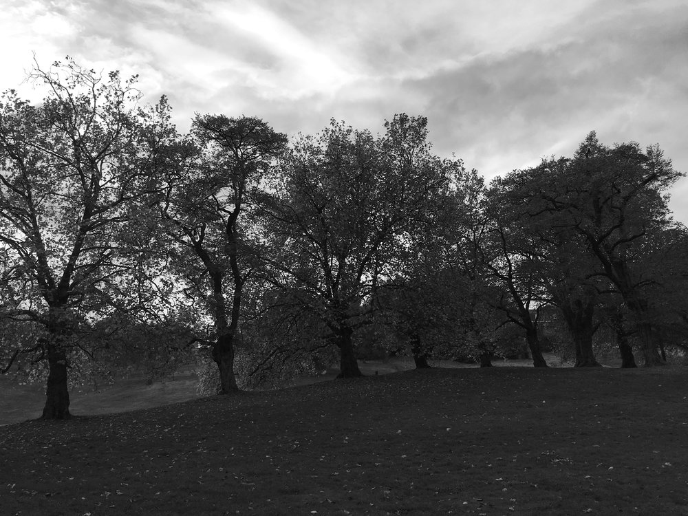 And while there has been lots of autumn colours in november these trees look great in black and white against the skyline
