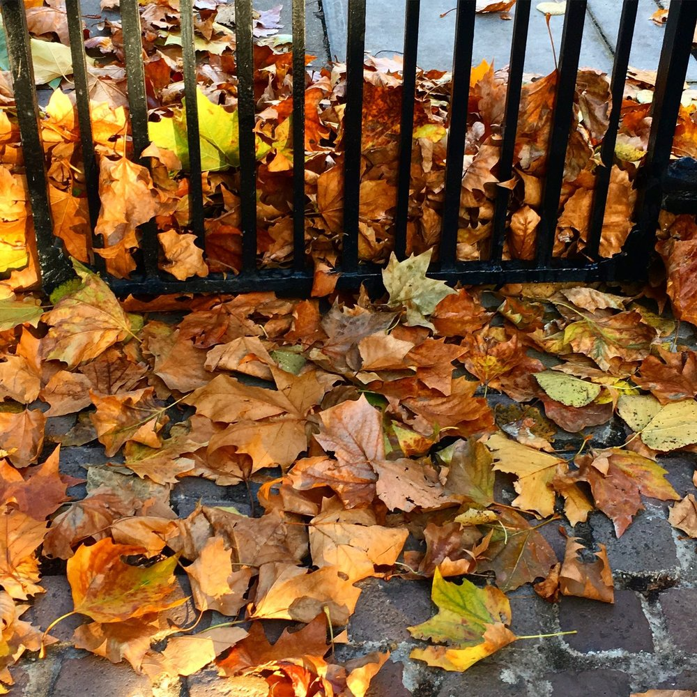 There's been lots of leaves this month, lovely russet and golden tones caught up against the park gates