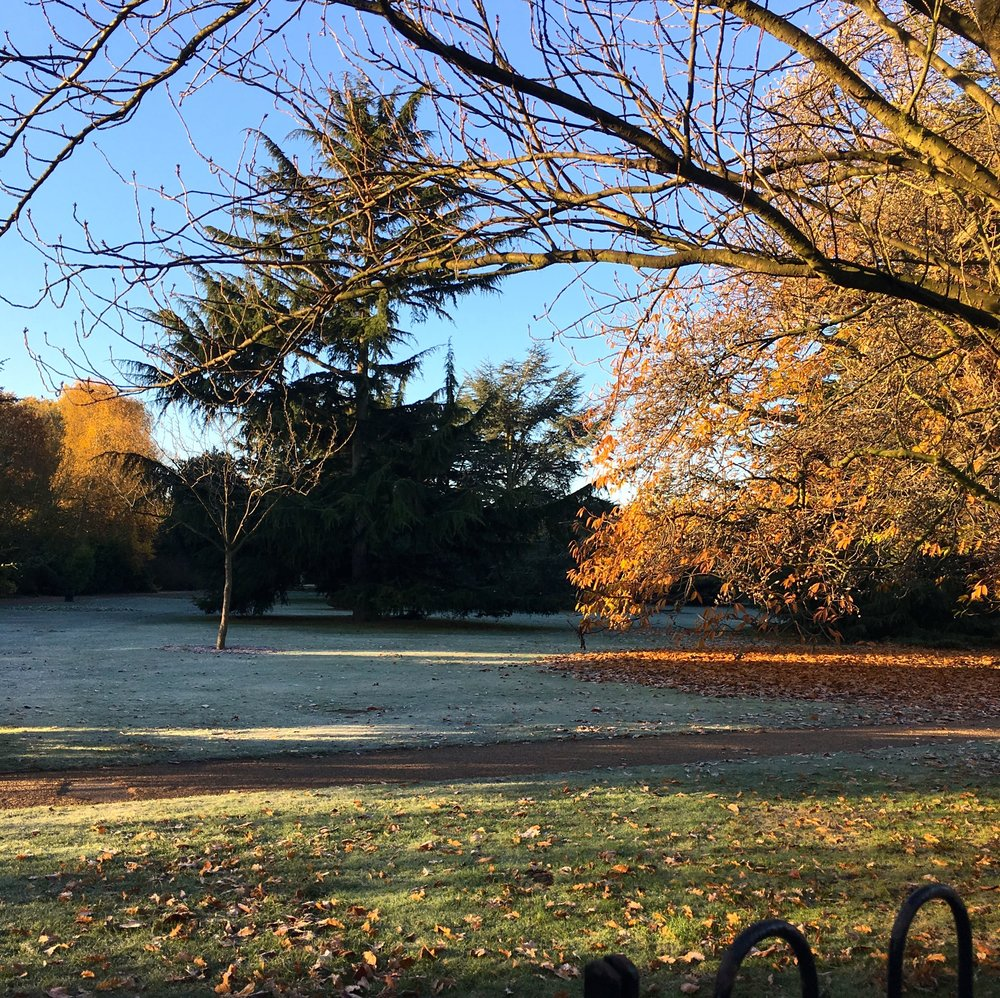 a morning frost in the flower garden in greenwich park this november