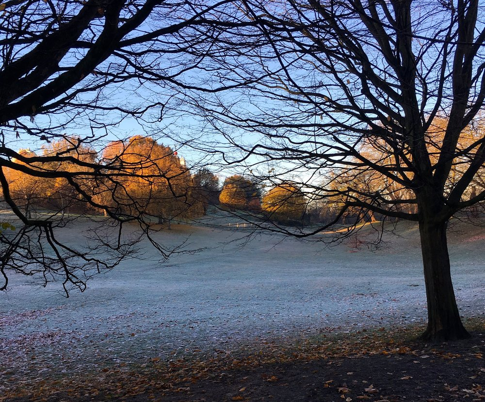 Looking through the trees at a frosty greenwich park