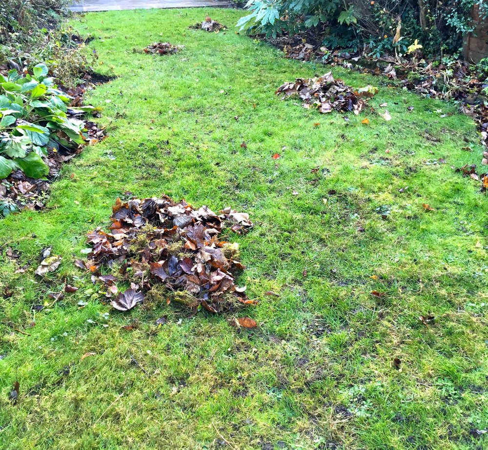 piles of leaves on the grass - and these were only a small part of the leaves we picked up this weekend