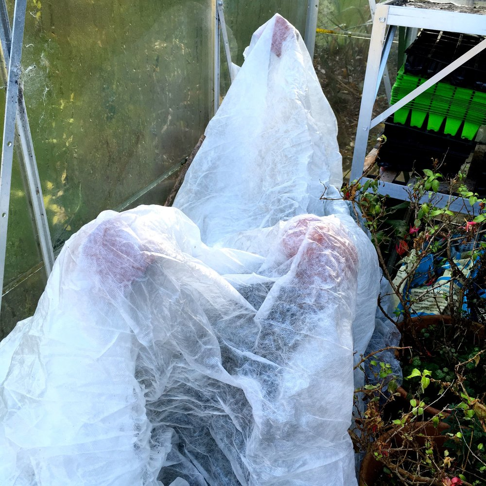 the ghostly image of my fleece covered greenhouse