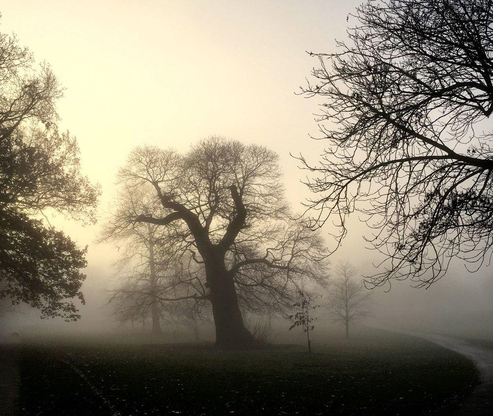 FOG IN GREENWICH PARK