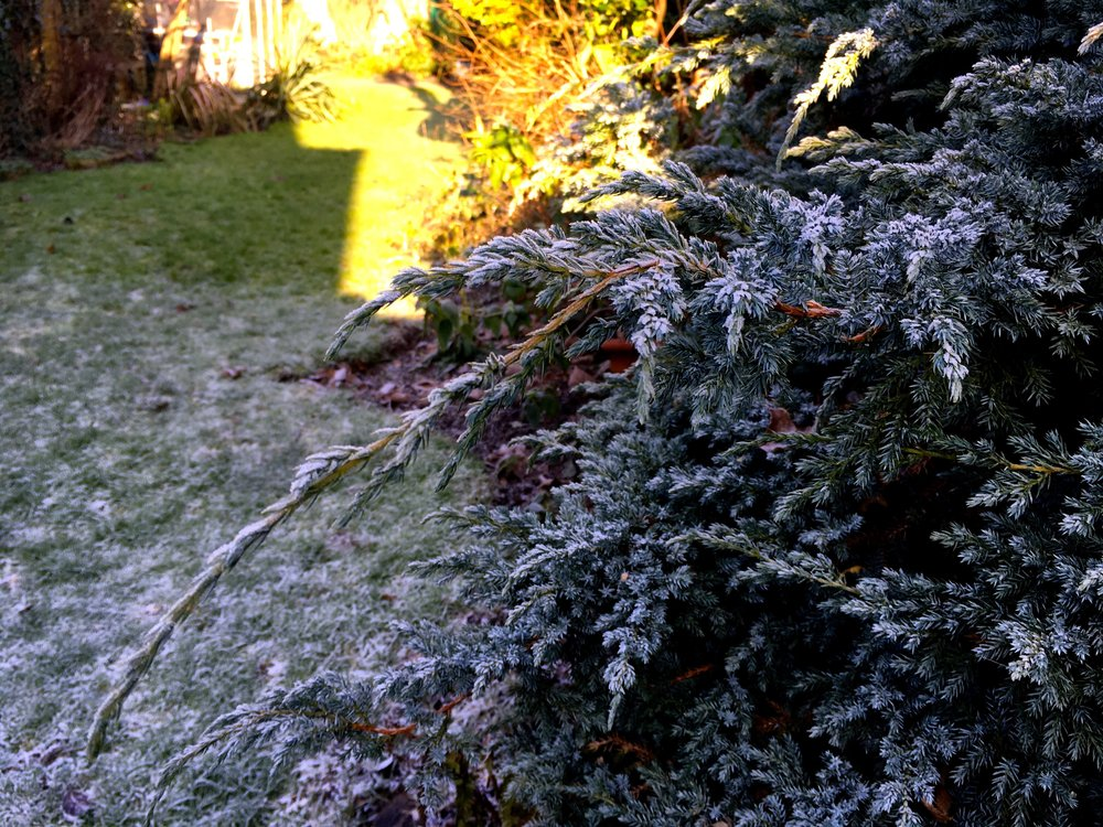 Standing at the conifer it was easy to see where the sun and the frost line are