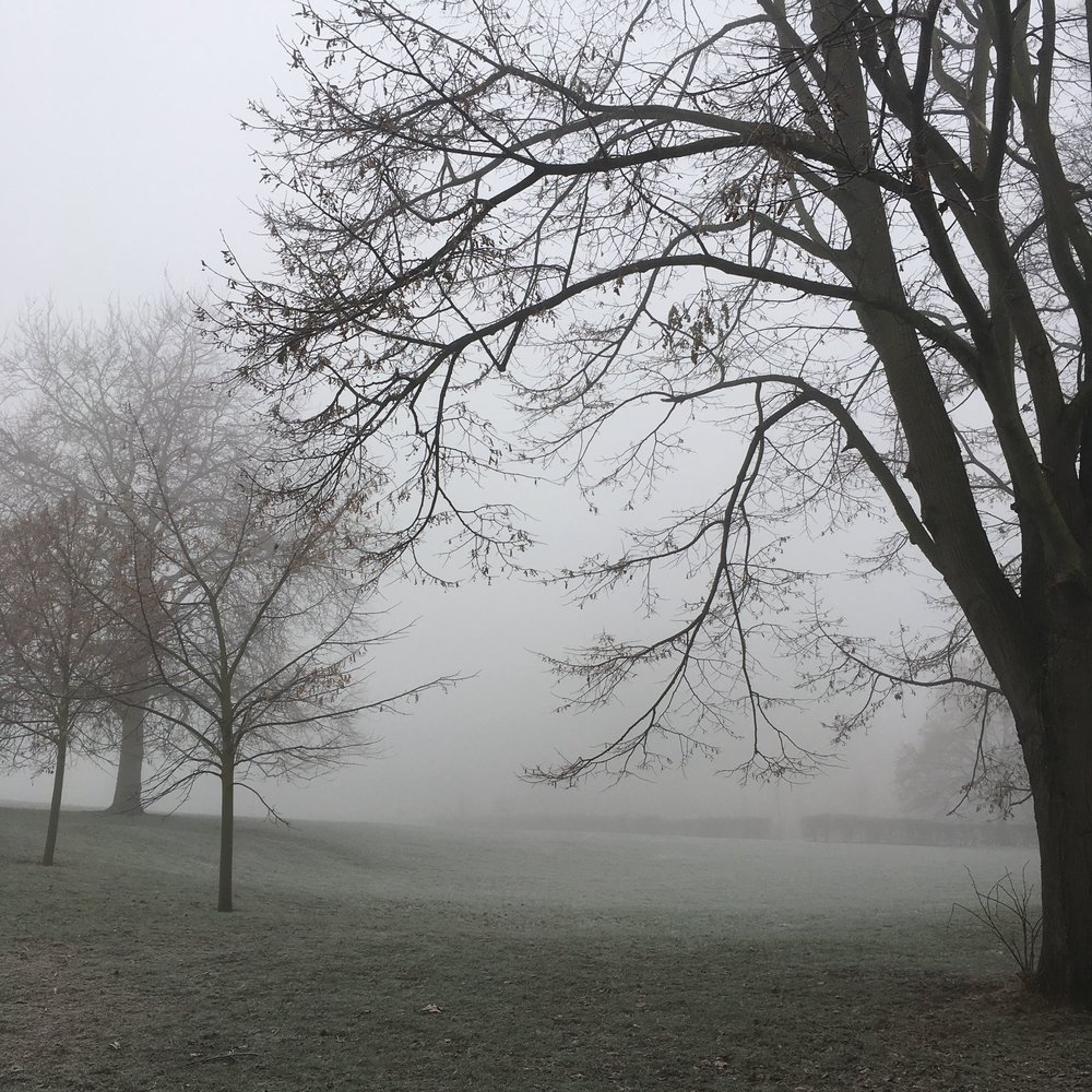 And then there was the foggy mornings in Greenwich Park, which brought great photo opportunities