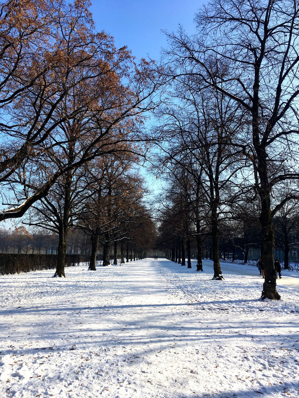 Looking down the avenue of trees in the Hofgarten