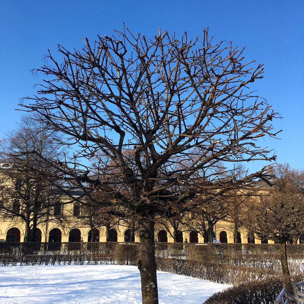 Bare trees show the structure of the garden in the centre of Munich