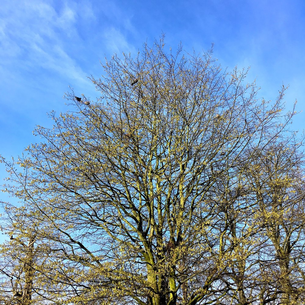 Blue skies but the trees were still lacking in leaves at the start of the month