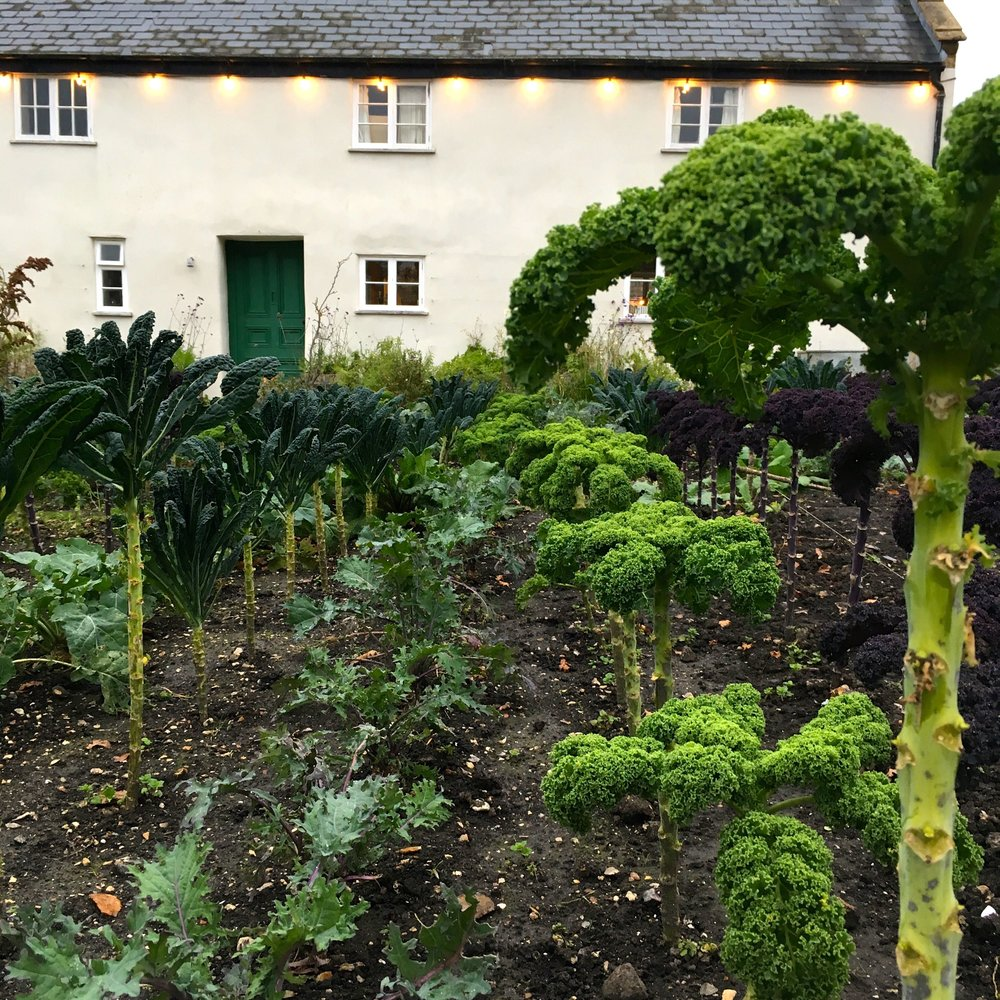 kale with River Cottage HQ in the background - a view you'll recognise from the TV