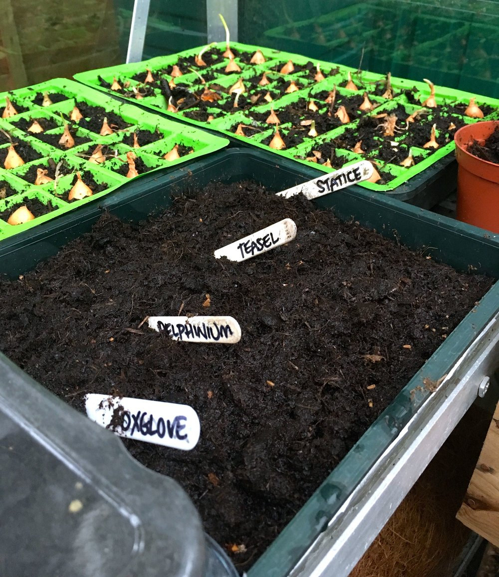 I've even started to sow some flowers, not sure how these will do