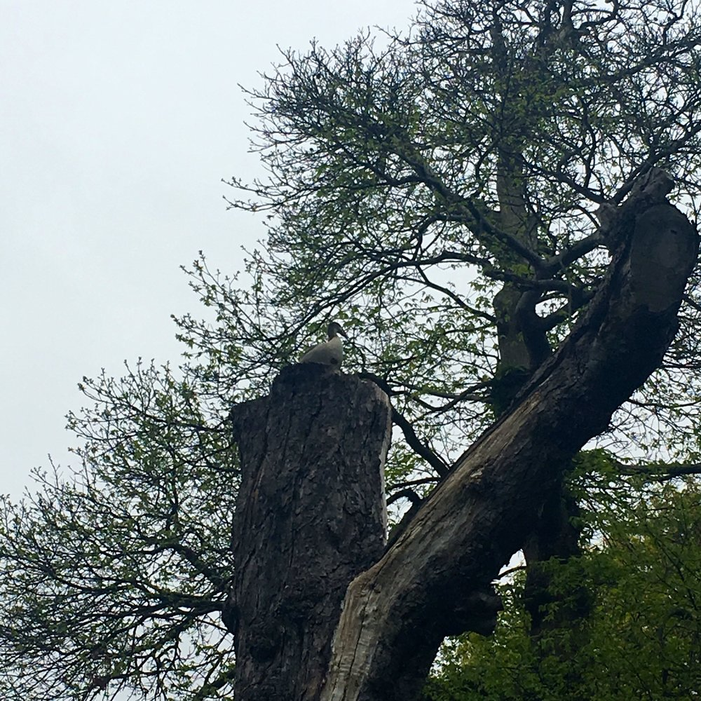 another bird perched on the top of this tree trunk, greenwich park