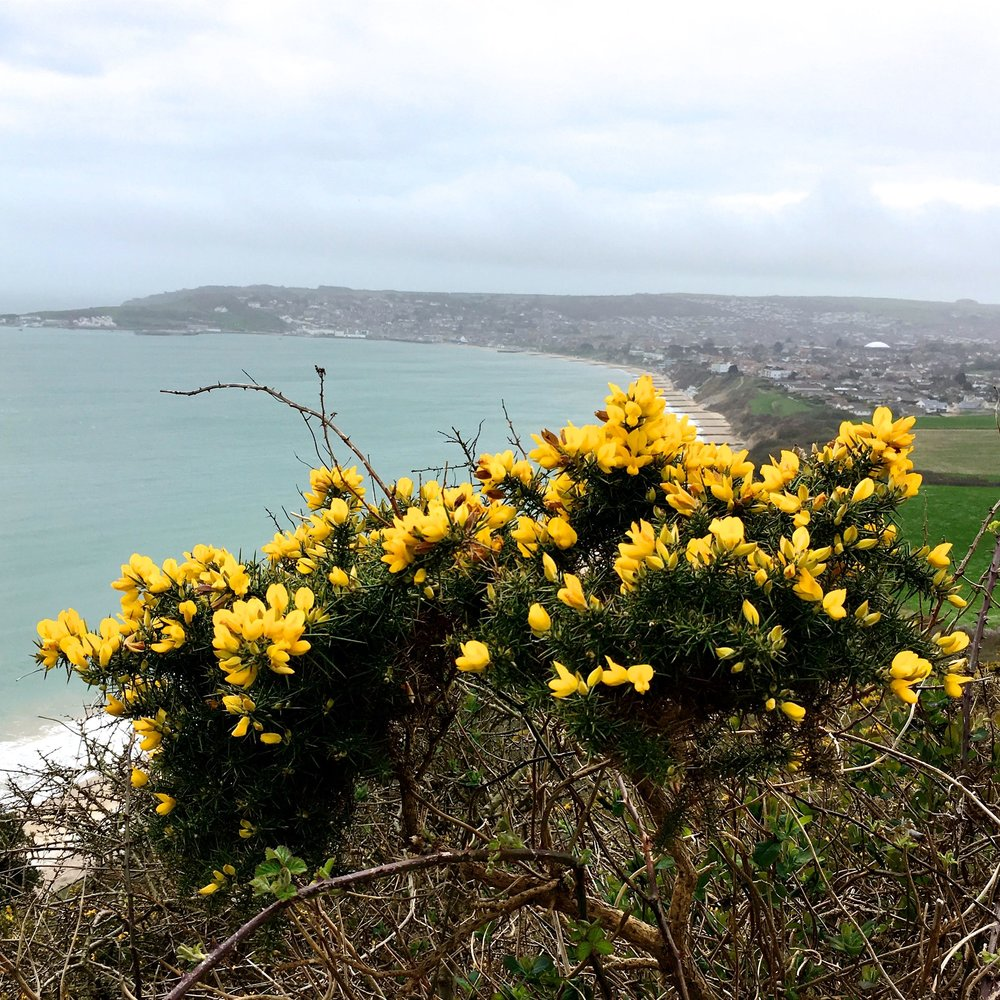 A look back to where we'd come from, again with the gorse framing our view