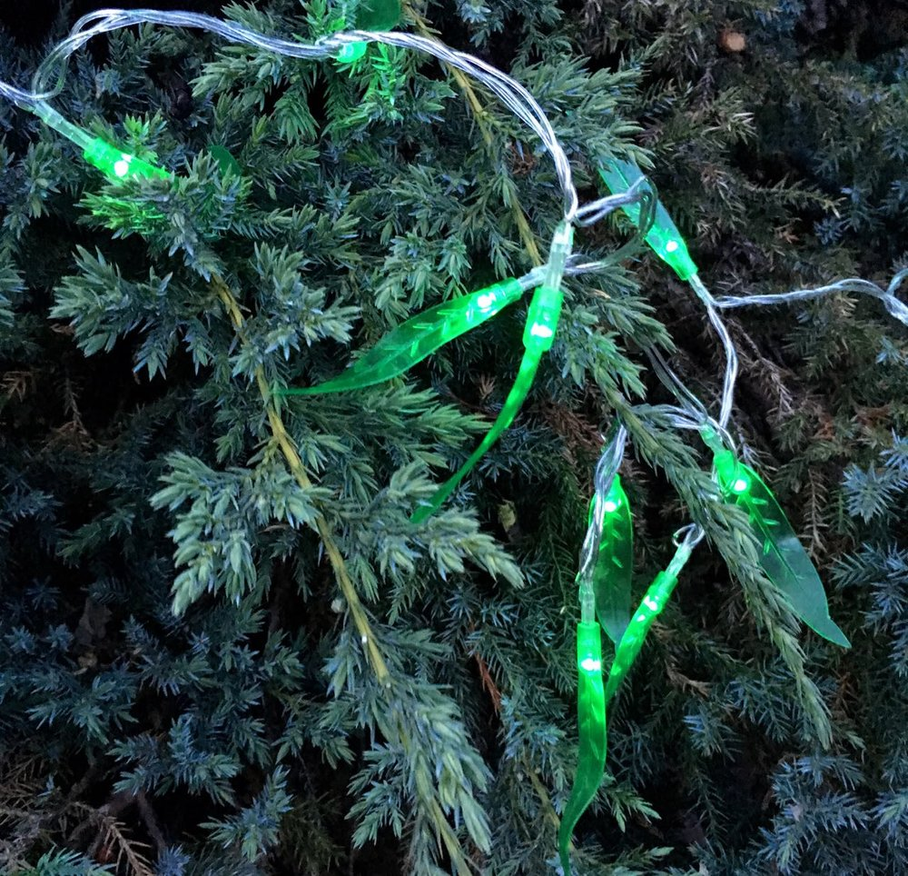 Green LED willow lights from HomeSense in our conifer