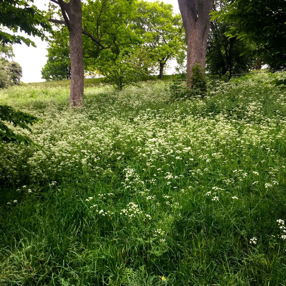 Greenwich Park adopting the meadow look early in May