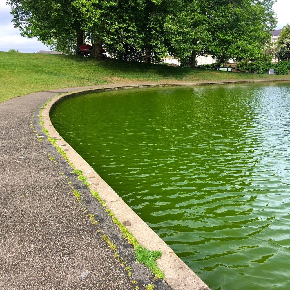 The 'green' boating lake in greenwich park