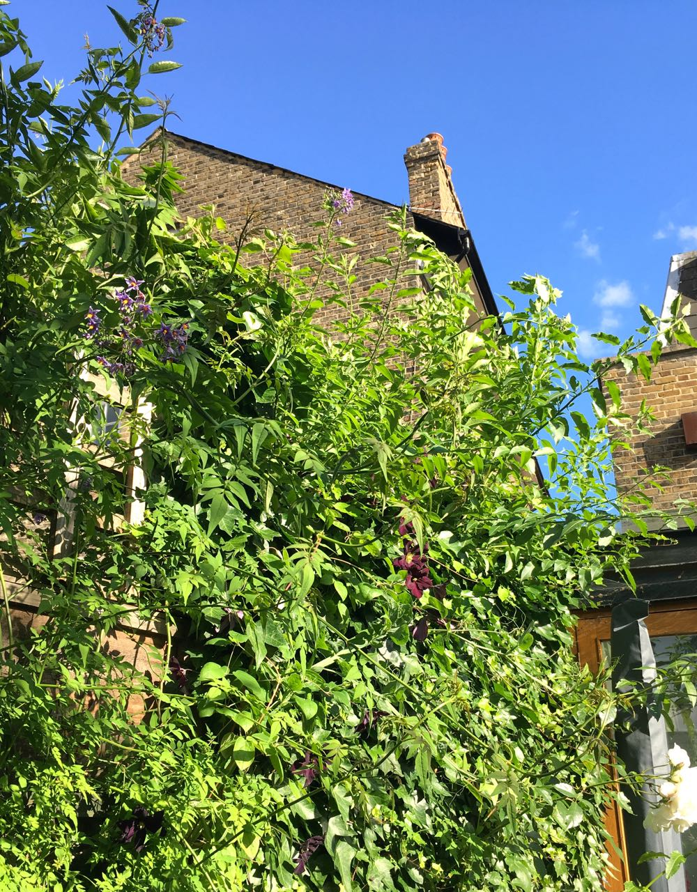 Rampant climbers, overgrown ivy and blue skies