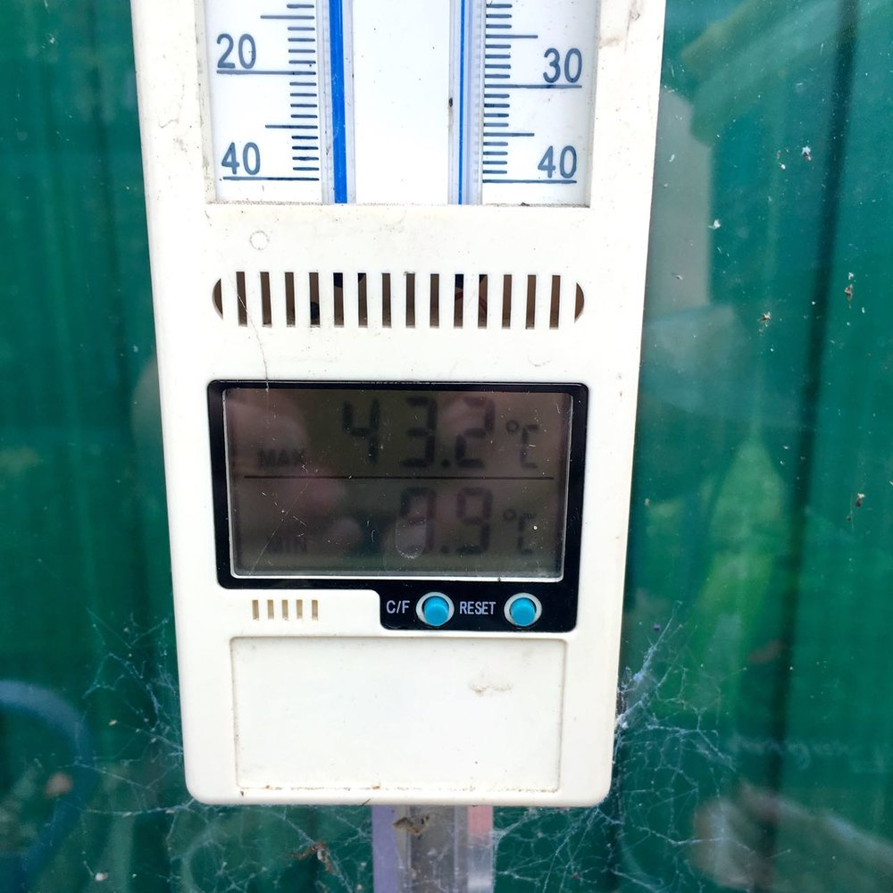 It's got pretty warm in the greenhouse too