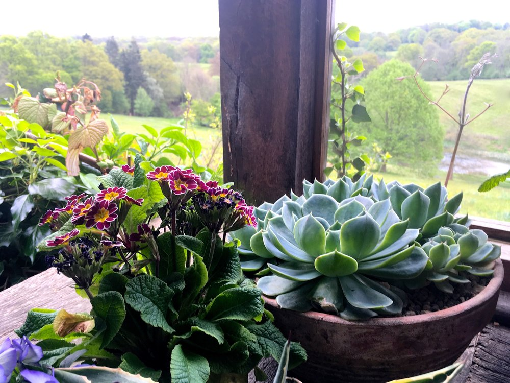 SUCCULENTS WITH A VIEW