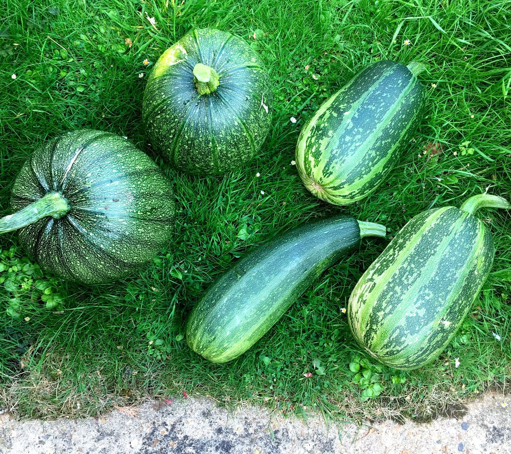 Two pumpkins and three marrows