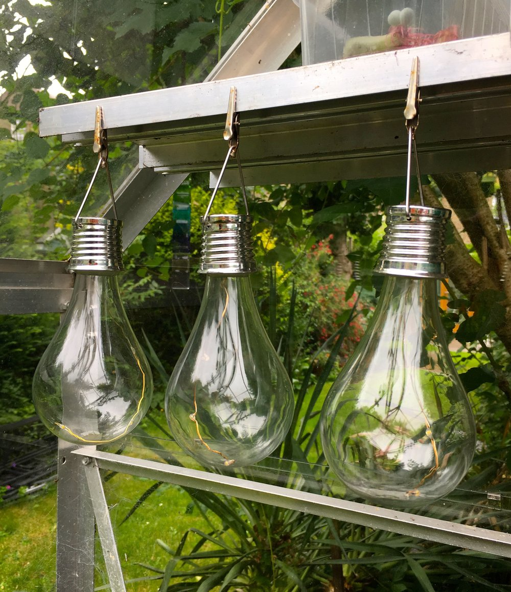 lightbulb solar lights sheltering from the wind
