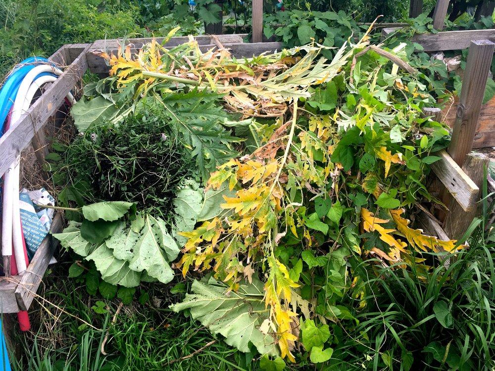 artichoke leaves on the compost heap