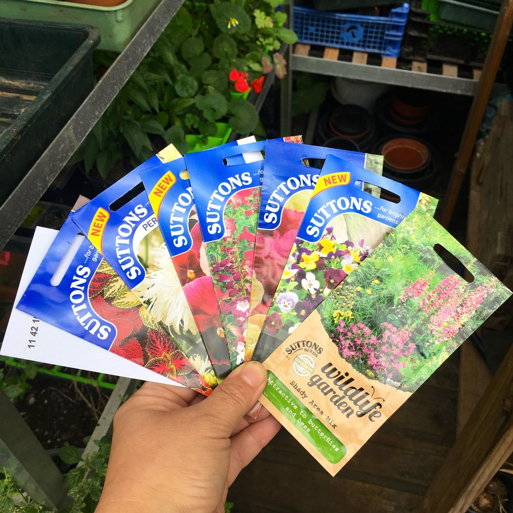 SEEDS FROM SUTTONS THAT CAN BE SOWN IN AUGUST