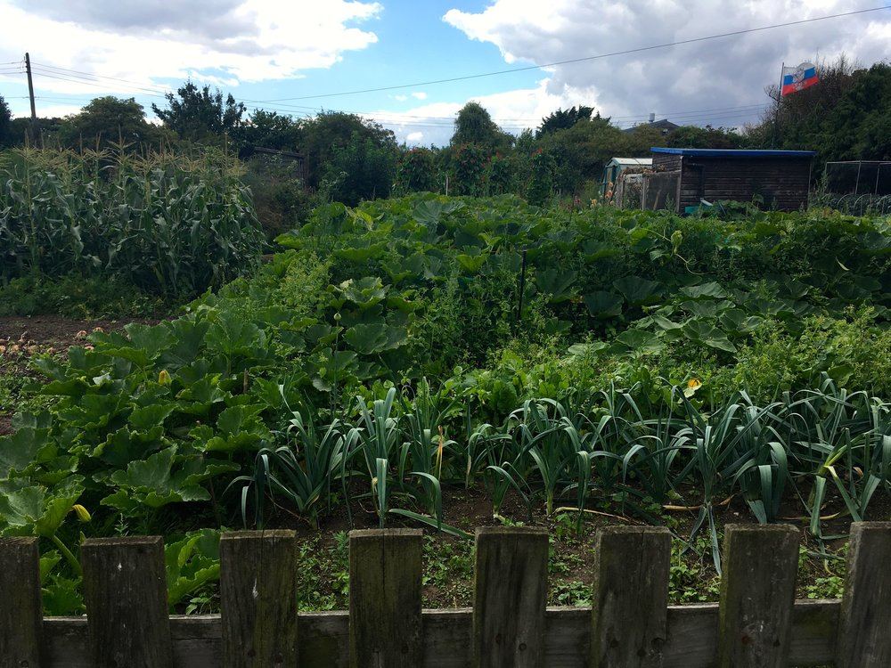 Peeking into the allotments in Orford Suffolk