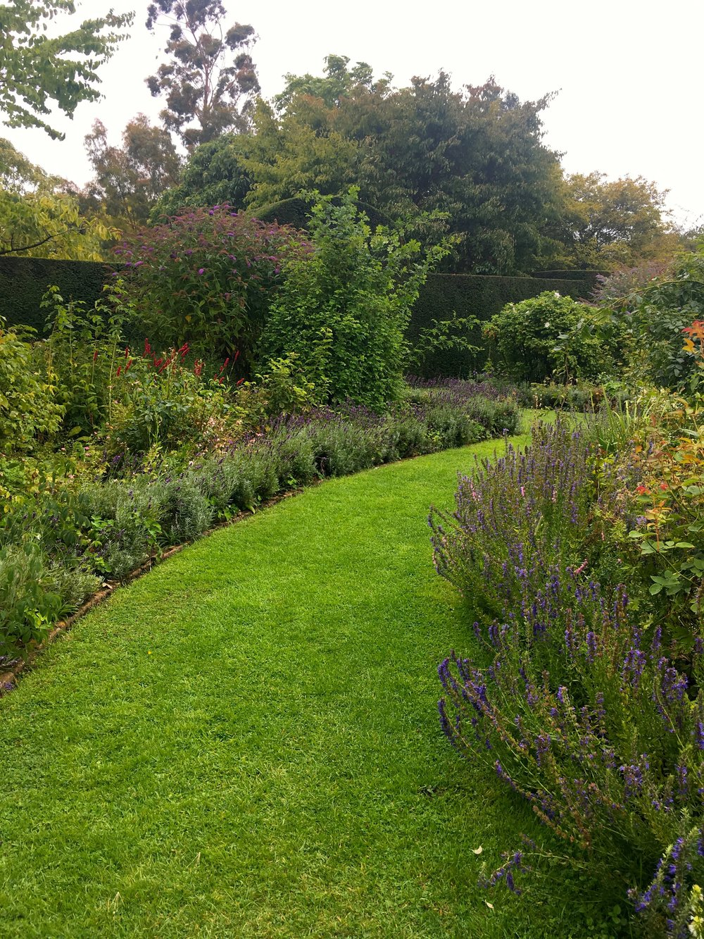 Exploring the herb beds in the knot garden at Helmington Hall