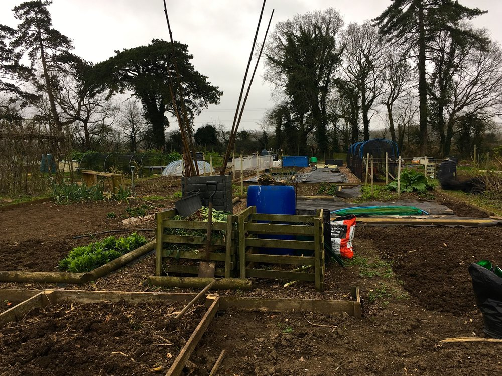 It was March there wasn't a lot of growing going on at the allotments at Kingston Lacy