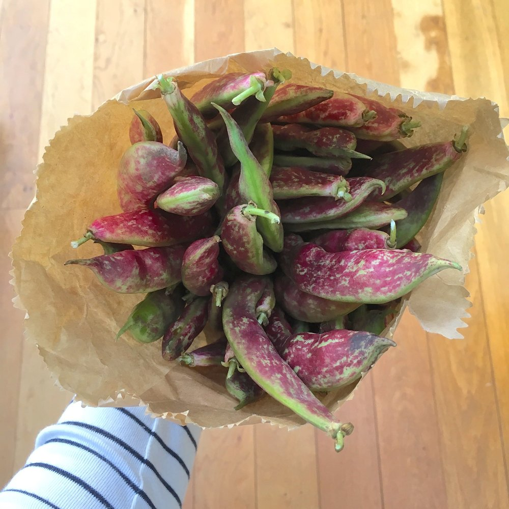 Admiring the borlotti beans from our plot