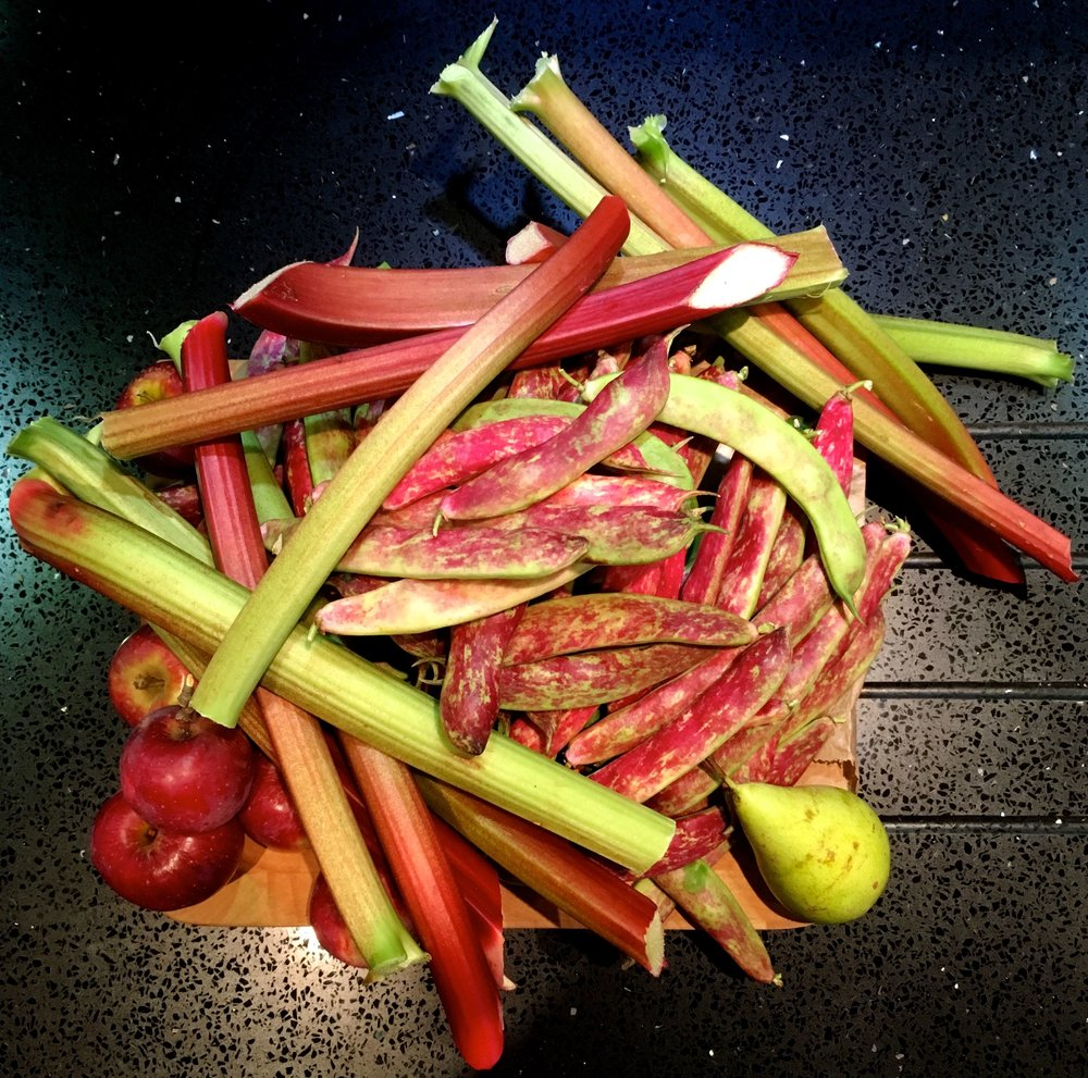 And rhubarb from the plot too