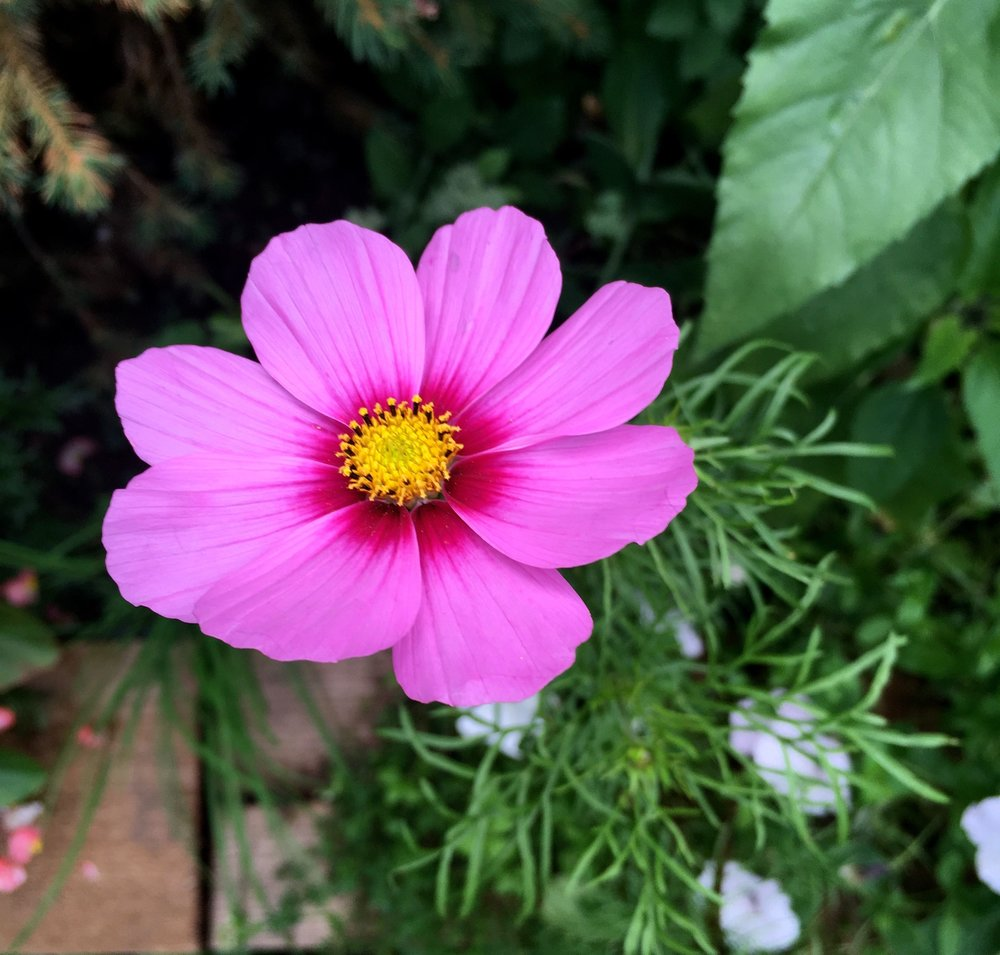 A cosmos in the sleeper bed
