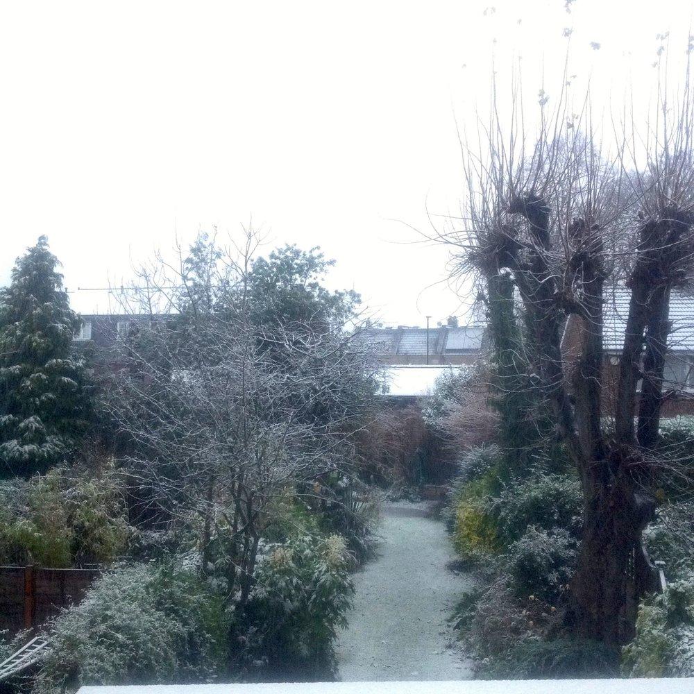 our snowy garden, december 2017