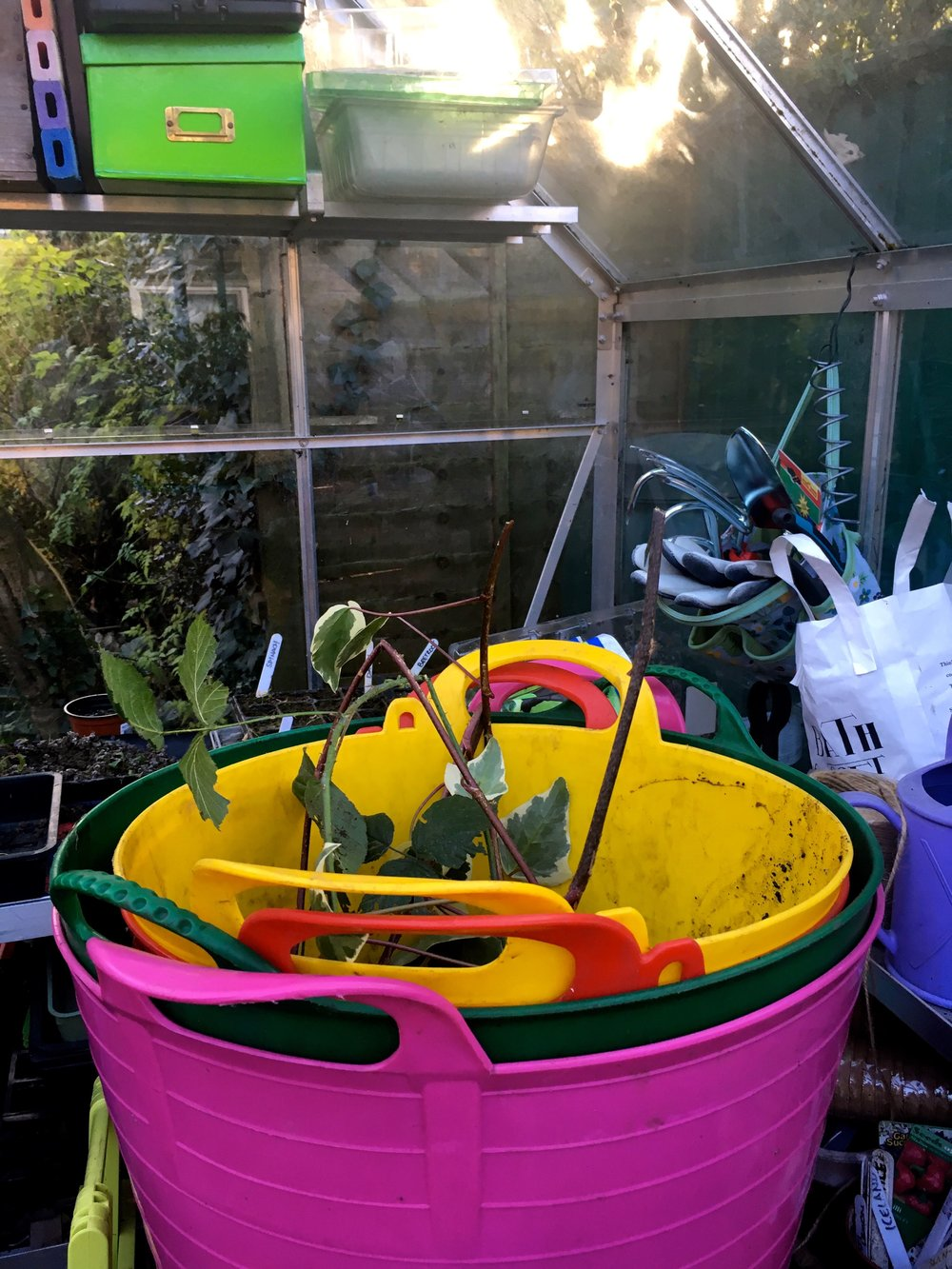 trugs piled up in the greenhouse