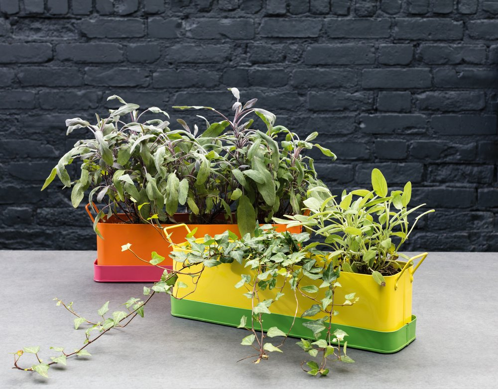 BOLD AND BRIGHT: LEON WINDOW BOX
