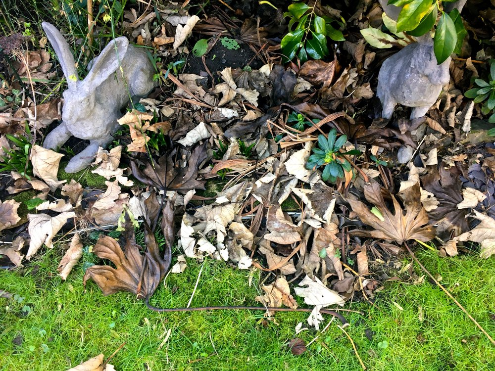 Hares and a blanket of leaves