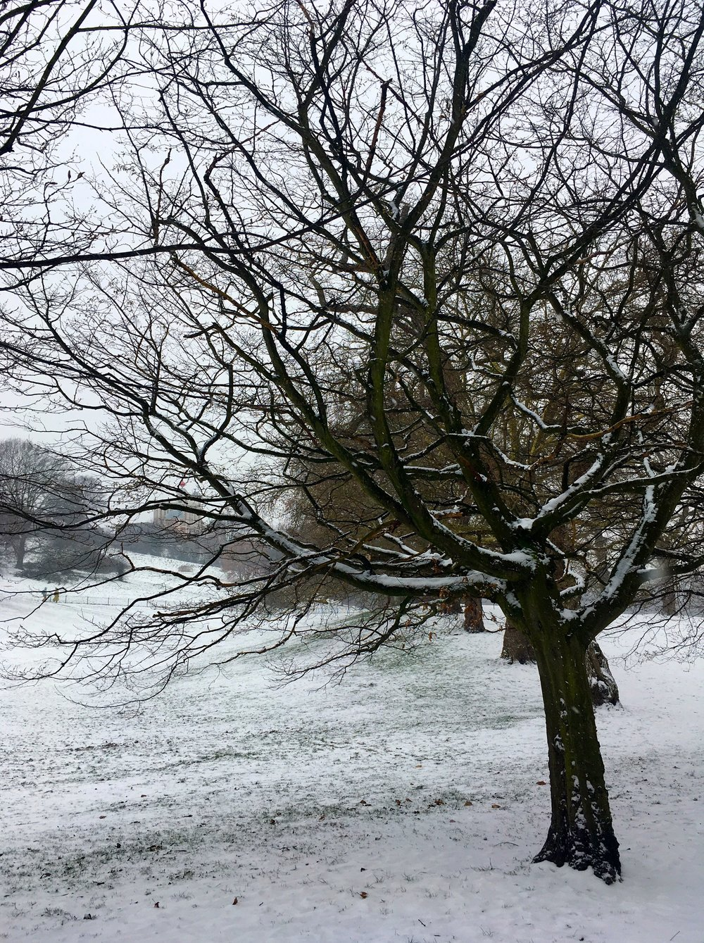 A tree in the snow in Greenwich Park