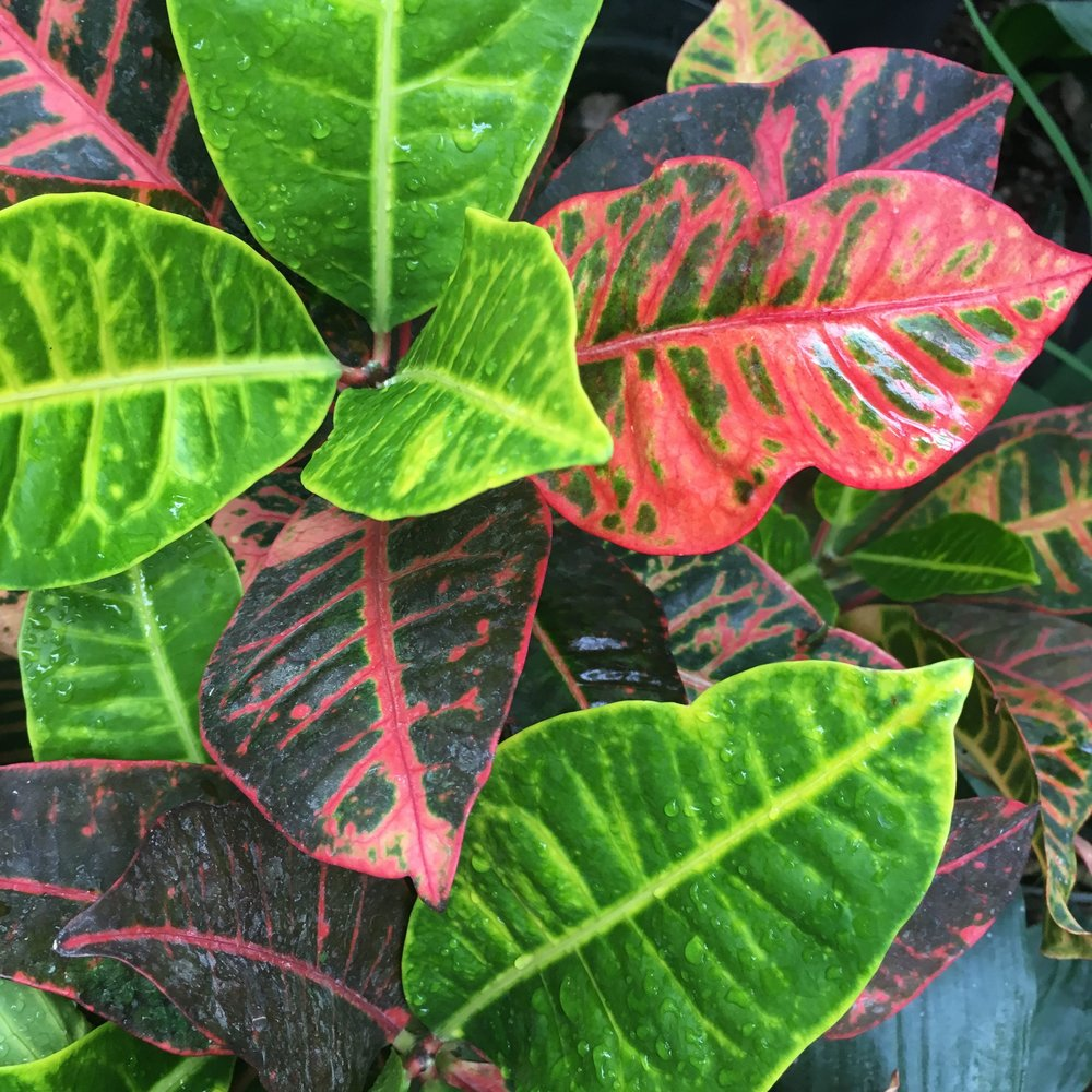colourful leaves in the jungle at cannington