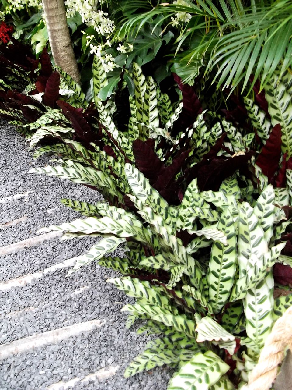 2015 SHOW GARDEN: THE HIDDEN BEAUTY OF KRANJI