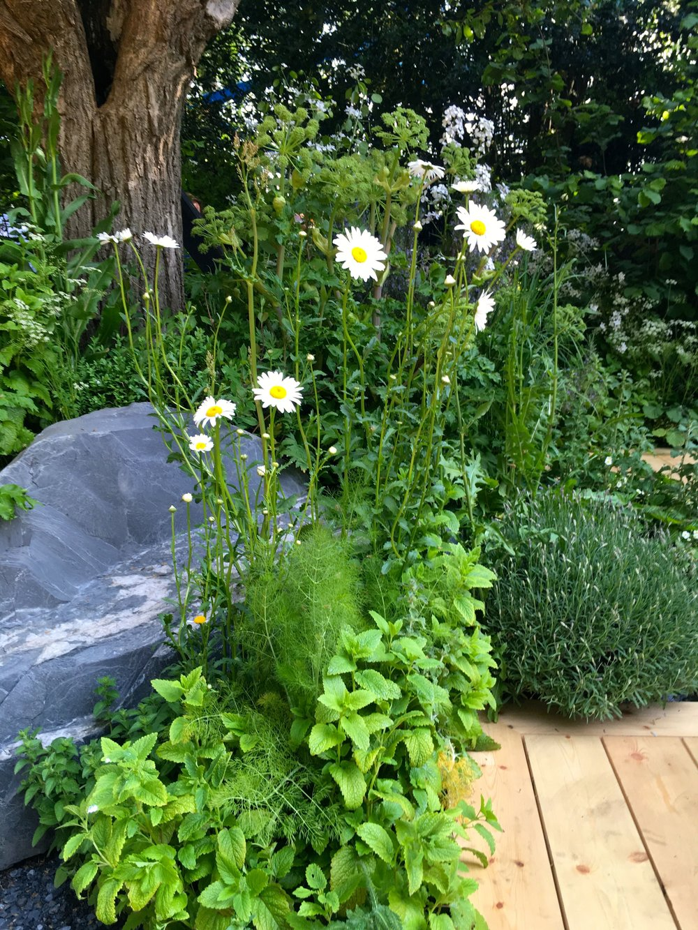 TRANQUIL PLANTING IN THE VIKING CRUISES IN THE GOLD MEDAL WINNING WELLNESS GARDEN