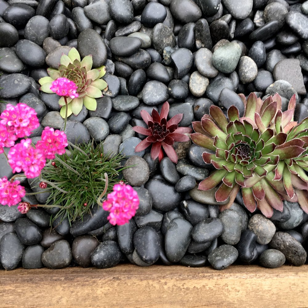 SUCCULENTS, PEBBLES AND PINK