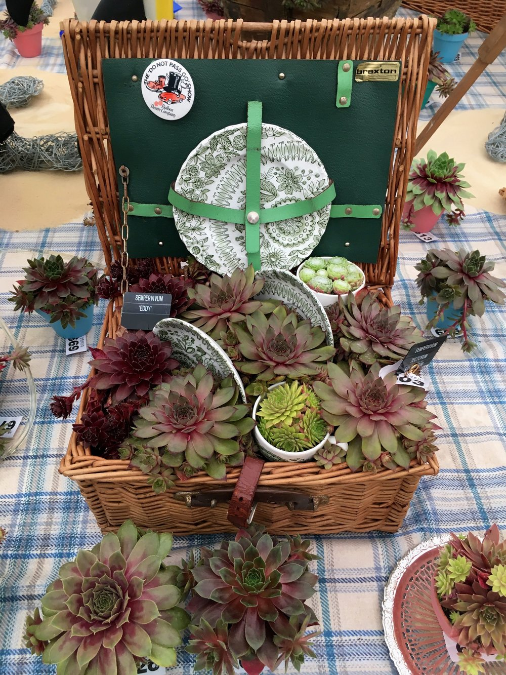 A PICNIC OF SUCCULENTS